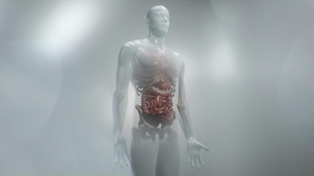 animation of a human body